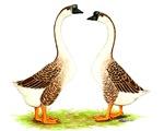 Chinese Goose Brown