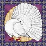 White Fantail Pigeon