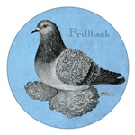 Frillback Pigeon Grizzle