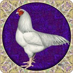 Ixworth Rooster
