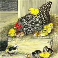 Poultry I thru Z