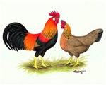 Leghorn Rooster and Hen