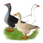 Fancy Geese