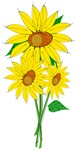 Sunflower Tee Shirts
