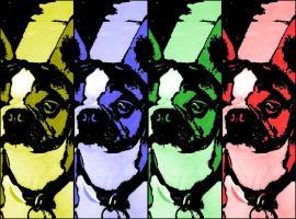 Boston Graphic Colorbar