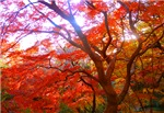 Autumn Color
