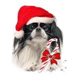 Pekingese Christmas Santa