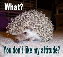 My Attitude Hedgehog