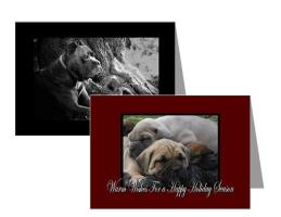 Cane Corso Holiday Cards