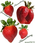 Strawberry Motif