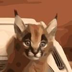 Wild Caracal Cat