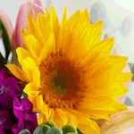 Floral Watercolor With Yellow Daisy