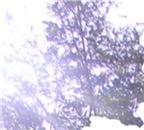 Whispering Blue Tree