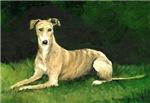 Laying Greyhound