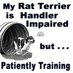 Rat Terrier Agility