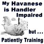 Havanese Agility