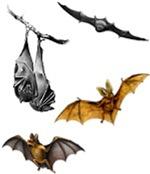 Bat T-Shirts!
