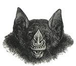 Grinning Vampire Bat