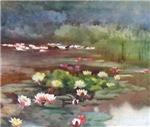 Wetland Water Lilies