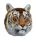 Manchurian Tiger T-Shirts