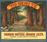 Yosemite Fruit Crate Label