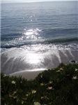 Ocean's Spring