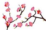 flowering quince valentine