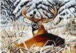 Restful Moment Deer Wildlife