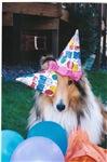 Birthday Hats Collie