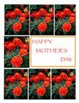 MARIGOLDS FOR MOM
