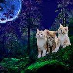 Cats wolf shirt kitten
