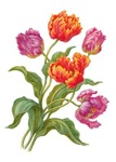 Wine and Apricot Parrot Tulips