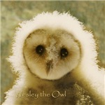 Wesley The Owl Cards, Journals