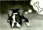 boston terrier mr. bungles