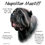 Neapolitan Mastiff (black)