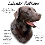 Labrador Retriever (chocolate)