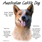 Australian Cattle Dog (red)