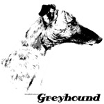 Greyhound Charcoal