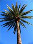 .palm tree.