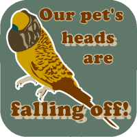 Our pet's heads are falling off!