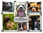 Our Pack 2013 Calendar