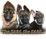 German Shepherd Ears
