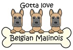 Three Belgian Malinois