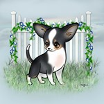 Garden Fence Chihuahua- Smooth Coat Tri