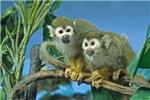 Monkeys on a Limb