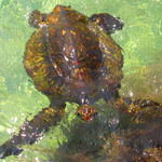 Turtle, Surfacing