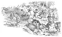 Runaway Boars
