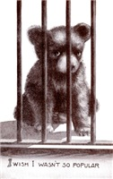 Popular Bear Cub