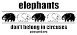 Elephants Don't Belong in  Circuses