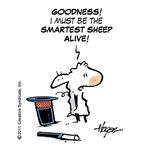 The smartest sheep alive.
